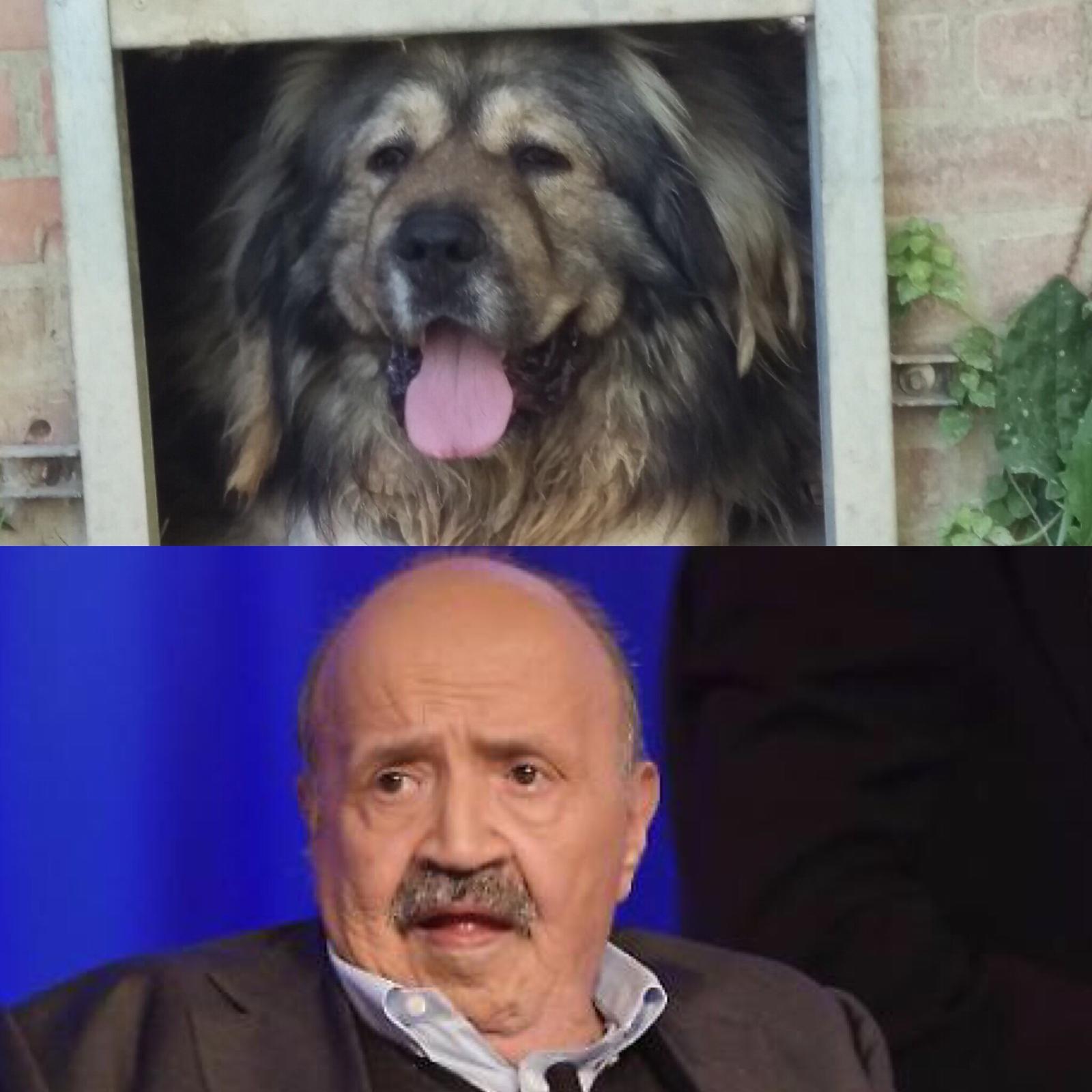 Cani E Gatti Uguali Ai Personaggi Famosi Adottateli